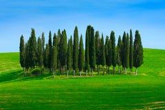 Grönt fält med mörker - blå himmel med vitmoln och träd, Tuscany, Italien Tuscany landskap i sommar Grön äng för sommar med Royaltyfria Foton