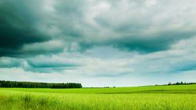 Grönt fält med mulen molntidschackningsperiod stock video