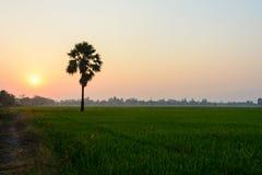 Grönt fält med palmträdet på soluppgång Arkivbild