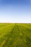 Grönt fält med träd i avståndet Royaltyfria Bilder