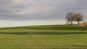 Grönt fält med två ensamma träd Arkivbild