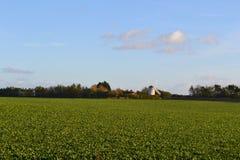 Grönt fält med väderkvarnen i bakgrund Royaltyfria Foton