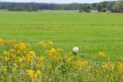 Grönt fält med vildblommor på staketet i södra Texas fotografering för bildbyråer