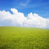 Grönt fält med vita oklarheter Arkivfoto