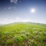 Grönt fält med vita oklarheter Arkivfoton