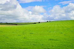 Grönt fält och blå himmel med molnbakgrund Royaltyfria Foton