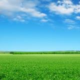 Grönt fält och blå sky arkivfoton