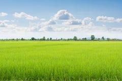 Grönt fält och himmel med vita moln Arkivfoton