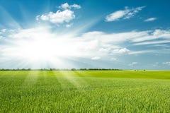 Grönt fält och moln Arkivfoto
