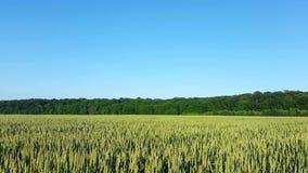 Grönt fält och ren himmel arkivfilmer