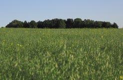 Grönt fält och träd över den blåa himlen Royaltyfri Fotografi