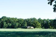 Grönt fält och träd och blå himmel och bunker Royaltyfri Bild