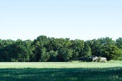 Grönt fält och träd och blå himmel och bunker Royaltyfri Foto