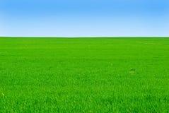 Grönt fält på bakgrunden av blå himmel. Arkivbilder