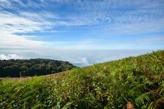 Grönt fält på berget med blå himmel Fotografering för Bildbyråer