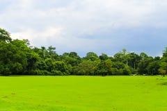 Grönt fält på det Wang Ta Krai Waterfall Nakhon Nayok området, Nak royaltyfri bild
