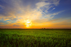Grönt fält på en bakgrund av en härlig solnedgång Arkivfoton