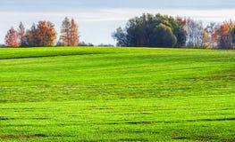 Grönt fält på en solig dag Royaltyfria Foton