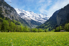Grönt fält på grunden av de schweiziska fjällängarna Arkivfoto