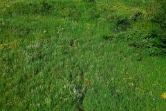 Grönt fält, sikt för fågelöga Royaltyfri Fotografi