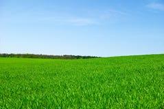 Grönt fält, skog mot den rena blåa himlen Arkivfoton