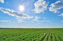Grönt fält under en klar himmel Arkivbilder