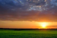 Grönt fält under solnedgånghimmel Arkivbild