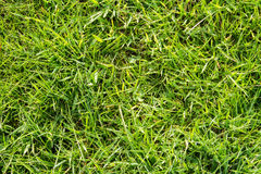 Grönt fältgräs Royaltyfria Bilder