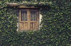 Grönt fönster royaltyfri bild