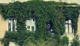 Grönt fasadhus Fotografering för Bildbyråer