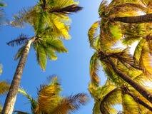 Grönt fotografi för naturväxtIndien blad Arkivbilder