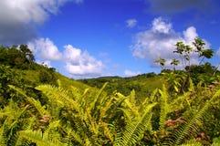 grönt frodigt för ferns Arkivfoton