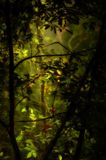grönt frodigt för skog fotografering för bildbyråer