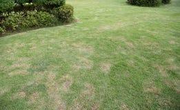 Grönt frodigt gräs i en trädgård med busken arkivfoto