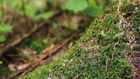 Grönt frodigt mossamakroskott lager videofilmer