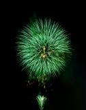 Grönt fyrverkeri Fotografering för Bildbyråer