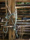 Grönt gammalt rep och sugrör fotografering för bildbyråer