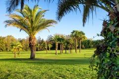 Grönt golffält och blå himmel arkivfoton