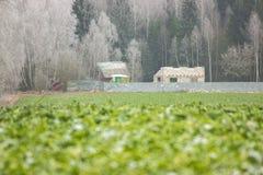 Grönt gräs är defocused, bakgrund, textur Skina på solen oavslutat hus i bakgrunden royaltyfria bilder