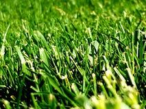 Grönt gräs fotografering för bildbyråer