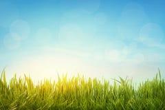 Grönt gräs Arkivfoto