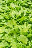 Grönt gräs Royaltyfri Foto