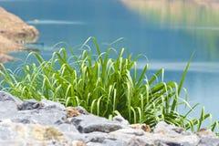 Grönt gräs 005 Royaltyfri Foto