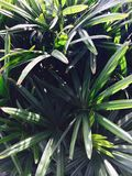 Grönt gräs Royaltyfri Fotografi