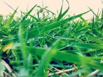 Grönt gräs Royaltyfri Bild