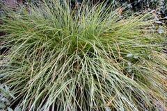 Grönt gräs arkivbilder