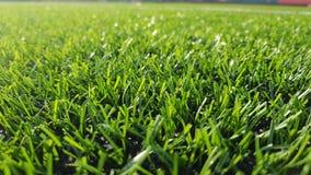 Grönt gräs av ett fotbollfält royaltyfri fotografi