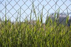Grönt gräs bak ett trådingrepp arkivfoton