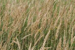 Grönt gräs Bakgrund royaltyfria bilder