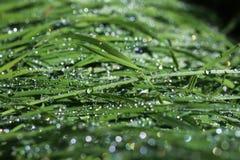 Grönt gräs efter regnet Arkivbild